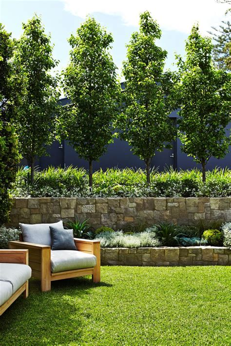 backyard privacy trees outdoor residential project mosman sydney best privacy