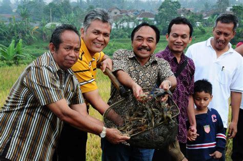 Pakan Udang Sawah besarkan benih udang galah sistem ugadi info akuakultur
