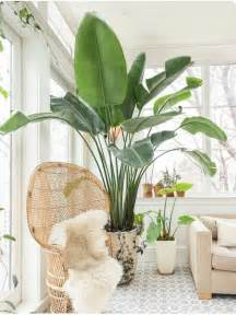 large indoor plants 25 best ideas about large indoor plants on pinterest