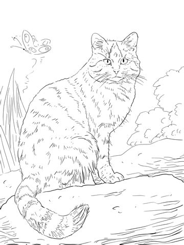 european wild cat coloring page  printable coloring