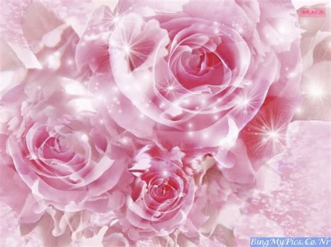 beautiful flowers wallpapers love quotes