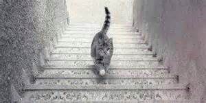 Going Up Stairs by Cat Going Up Or Down Some Stairs Is An Optical Illusion