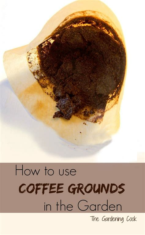 Coffee Grounds Gardening by Coffee Grounds Are Great For Camellias Hydrangeas Roses