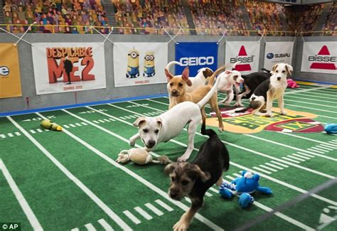 puppy bowl winner puppy bowl xi features more adorable dogs competing for most valuable puppy prize