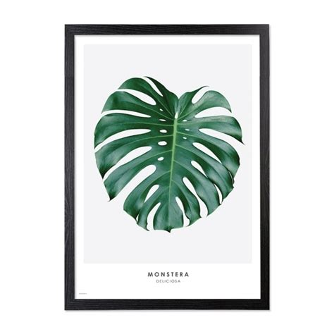 Poster Monstera monstera palm print framed a2 poster wall