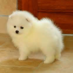 small breed dogs that don t shed breeds puppies