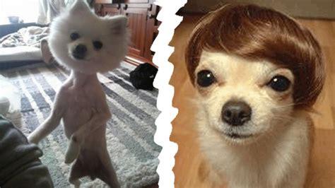 imagenes animales con pelo los m 225 s tiernos y peculiares cortes de pelo de perros
