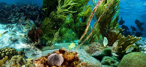 into the blue underwater sounds of nature for relaxation underwater wikipedia