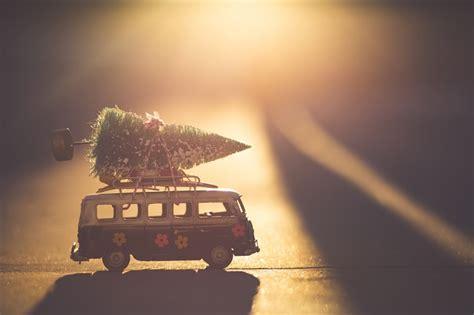 where to buy real christmas trees in brisbane brisbane kids
