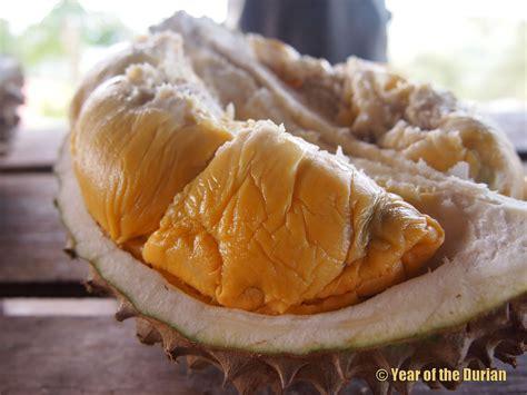 year   durian philippine durian varieties