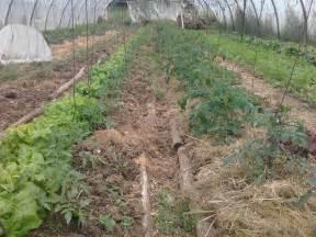 comment commencer en permaculture