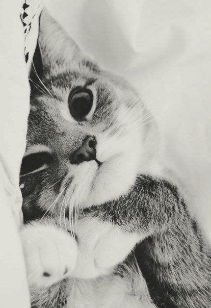 imagenes tumblr gatitos gatos tumblr buscar con google gatito pinterest