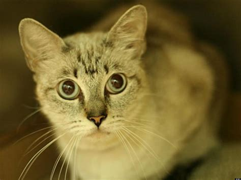 adopt a nyc adopt a pet in new york city this week s featured animals courtesy of nyc s animal