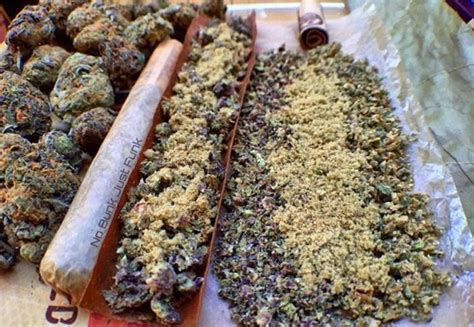 best place to buy cannabis seeds the 25 best best cannabis seeds ideas on