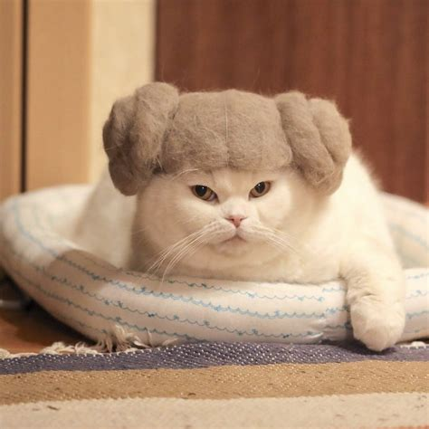 cat hair cat hair cat hats by photographer ryo yamazaki booooooom