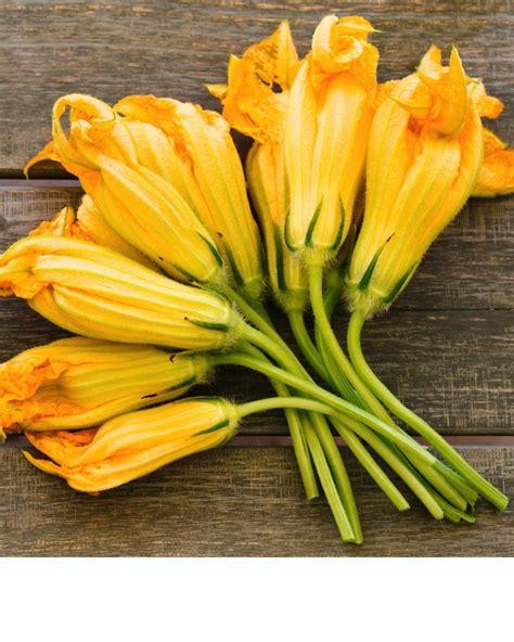 fiori di italia fiori di zucca le ricette migliori con i fiori di zucca
