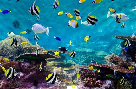 Aquarium Hiasan Dasar Bintang Laut gambar pemandangan di dasar laut yang indah kumpulan
