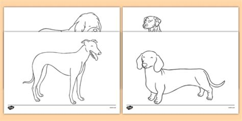 hairy maclary coloring pages dog themed colouring sheets dame lynley dodd hairy maclary