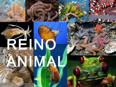 imagenes reino animal reino animal 1 poriferos