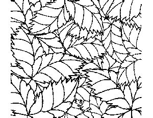 tropical leaves coloring pages tropical leaf pattern coloring page
