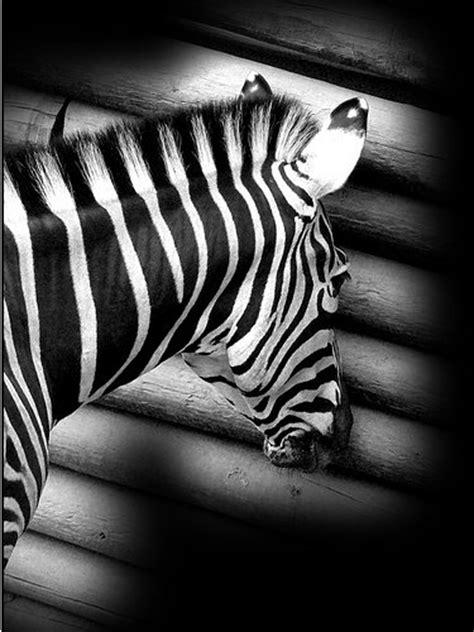 hacer imagen blanco y negro en gimp conkdepl 225 stika loreto 187 gimp