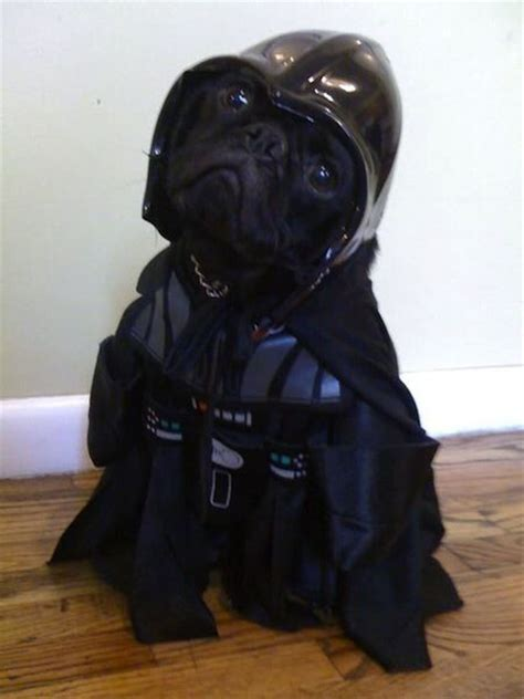 pug darth vader costume pug darth vader omfg lol i this stuff funniest photos