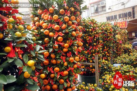 mandarin hong kong new year 2018 hong kong new year flower markets