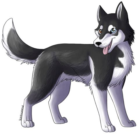 how to a husky how to draw husky