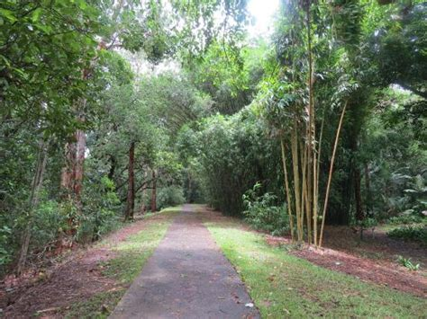 Cairns Botanic Garden The Bamboo Collection Picture Of Cairns Botanic Gardens Cairns Tripadvisor