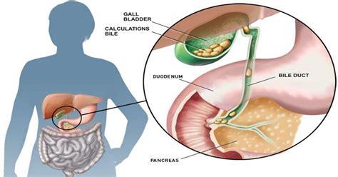 gallbladder and healthy fats gallbladder dating