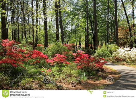 callaway gardens pine mountain georgia