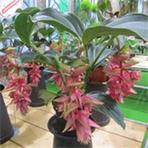 piante da interni poca luce piante da appartamento con poca luce piante da interno