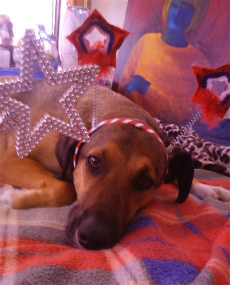 for dogs sake for dogs sake let s switch to silent fireworks incity times