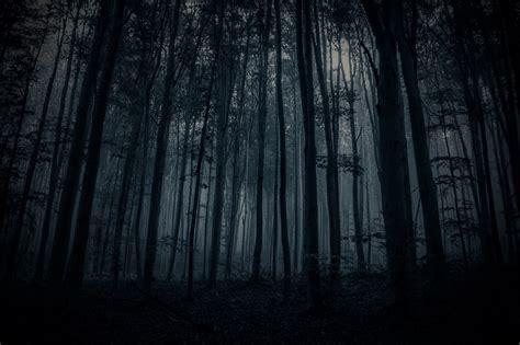 dark forest sidewalk diary flickr