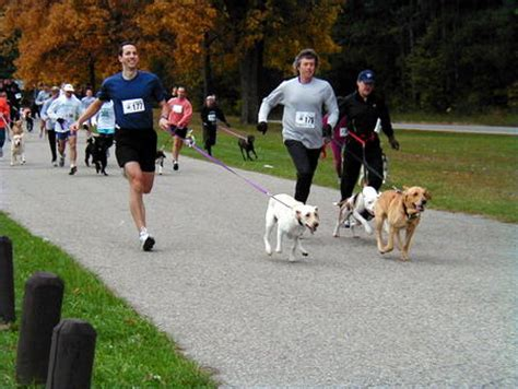 dogs to run with teaching your to run with you