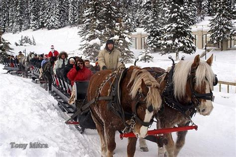 christmas tree farms boise 25 best ideas about sleigh rides on reindeer and reindeer