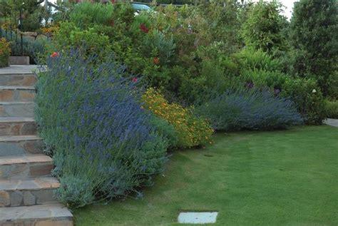 lavanda in giardino quando piantare la lavanda piante da giardino piantare