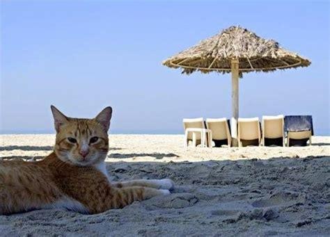 cosa portare in vacanza al mare portare il gatto in vacanza al mare ecco cosa fare per