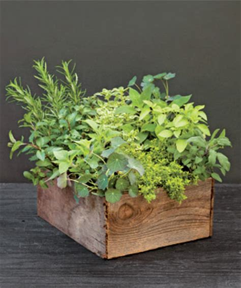 how to make an indoor herb garden how to make an indoor herb garden chatelaine