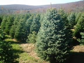 how to grow a christmas tree farm ehow hd coloring pages