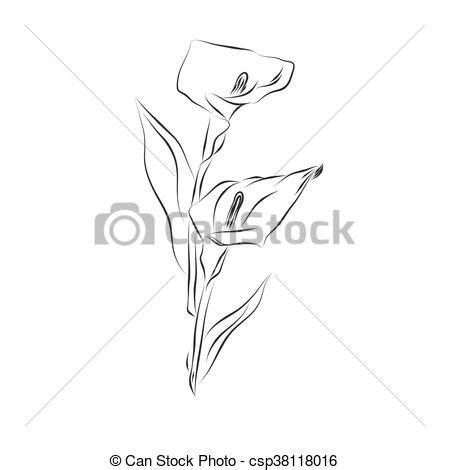 fiore disegno giglio schizzo fiore disegno schizzo fiore clip