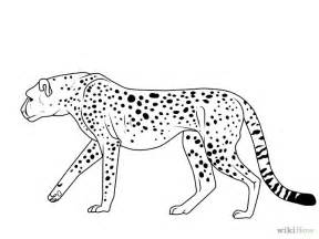 Easy Cheetah Drawing Standing Coloring Pages  Coloringstar sketch template