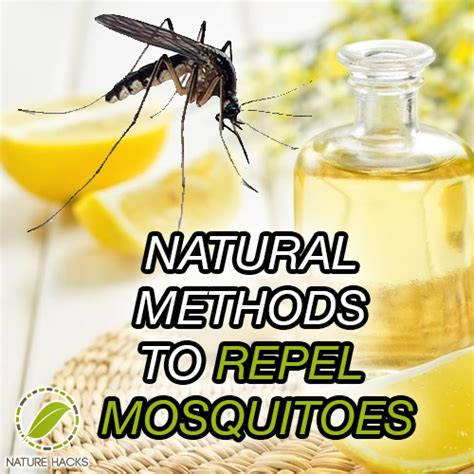 repel mosquitoes naturally nature hacks natural solutions for everyday life
