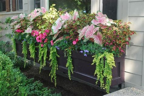 window box ideas for shade large window box with shade annuals window boxes