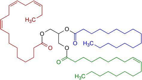triglyceride molecule diagram file triglyceride structural formulae v 1 png wikimedia