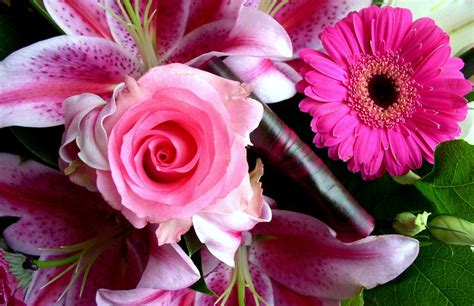 images of beautiful flowers beautiful flower image collection for free