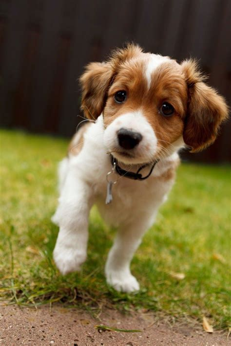 what type of is doge best 20 small breeds ideas on small puppy breeds small puppies and