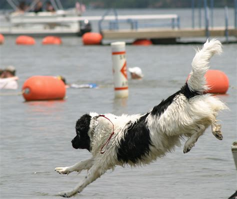 water rescue dogs 20 dogs preformed