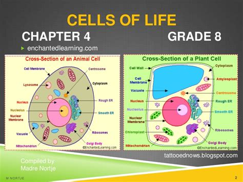 plant cell diagram grade 8 cells for chapter04