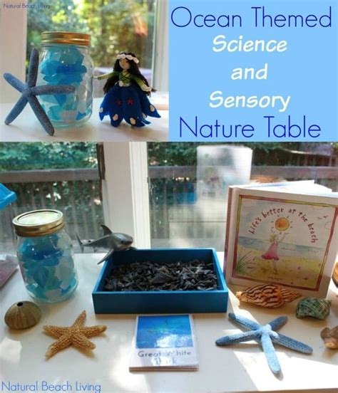 nature themed events ocean themed science sensory nature table shark